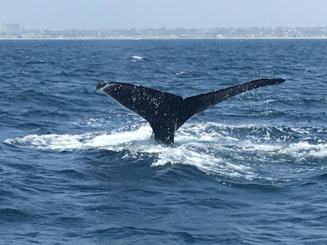 クジラに飲み込まれた男性が口から脱出し無事生還